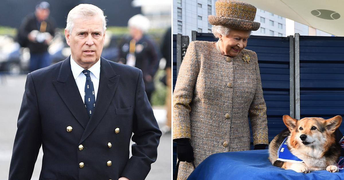 prince andrew surprised queen elizabeth two new corgis